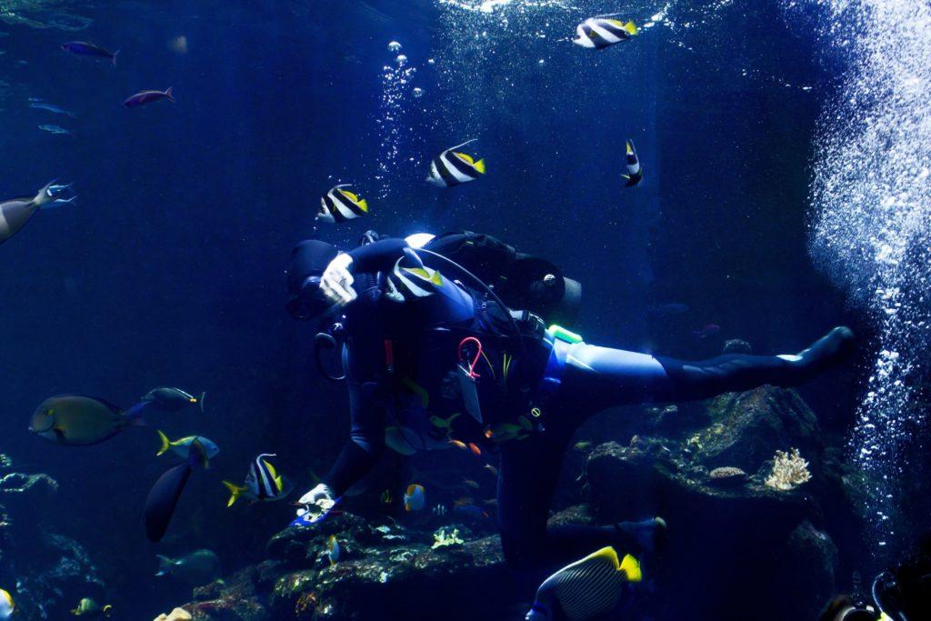 diving-pic-1